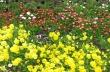 Цветница е празникът с най-много именици