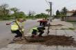 Нови дръвчета и розови храсти са засадени в Горна Оряховица в рамките на пролетното залесяване