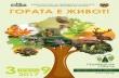 Нови дръвчета ще бъдат засадени в Горна Оряховица в Седмицата на гората