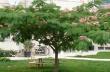 Над 200 дръвчета ще бъдат засадени в Горна Оряховица в рамките на кампанията за залесяване